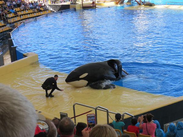 orcas loro parque Tenerife